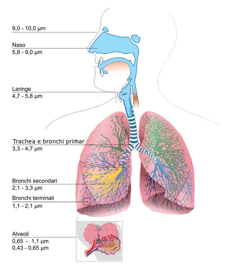 Rischi per la salute da inquinamento indoor aria di casa insalubre